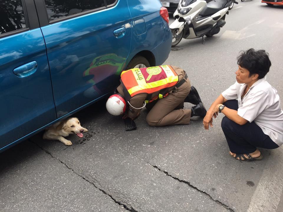 หมาวิ่งตัดหน้ารถยนต์