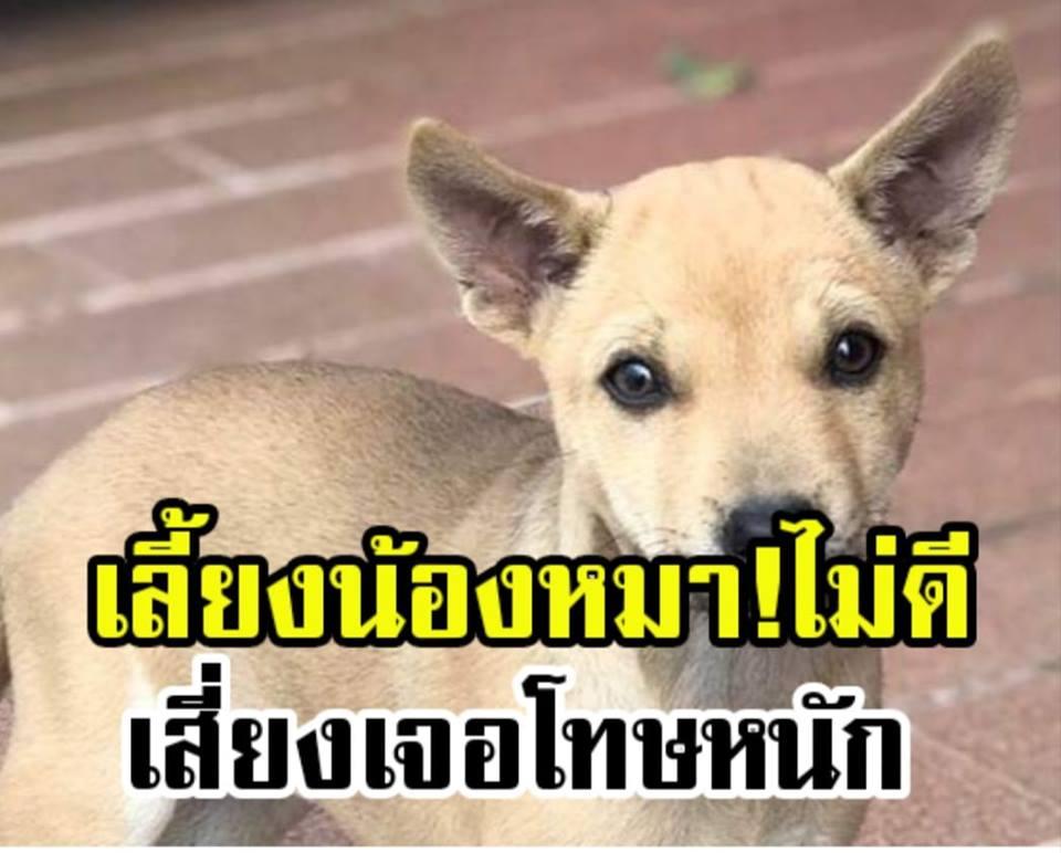 โทษคนเลี้ยงหมา