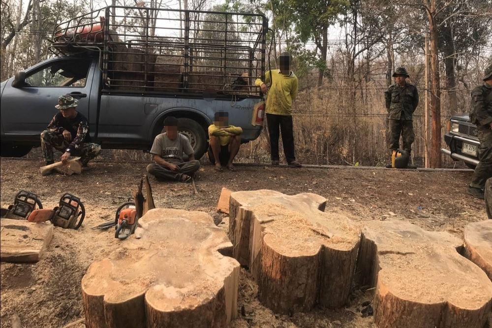 บุกตัดไม้บริเวณป่าเส้นทางสายพร้าว-เชียงใหม่