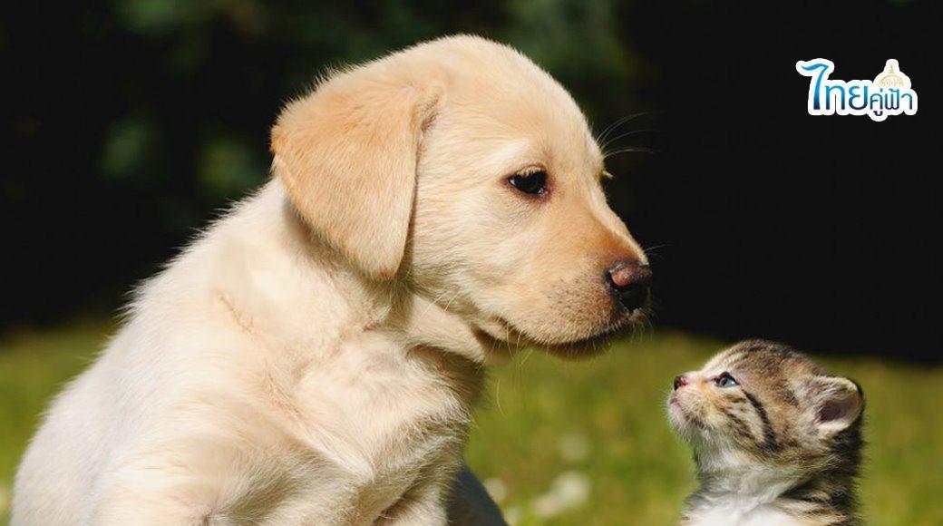 ฉีดวัคซีน หมา - แมว ฟรี