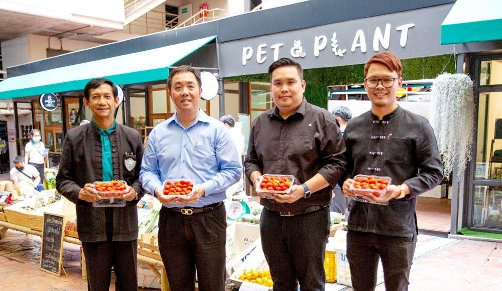 โครงการChiangmai Local Food
