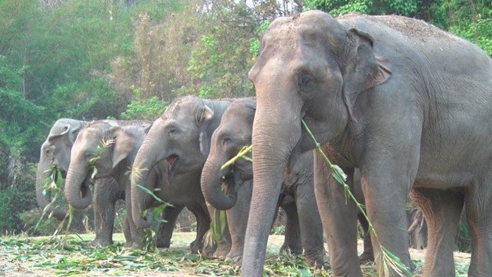 ปางช้างแม่สา