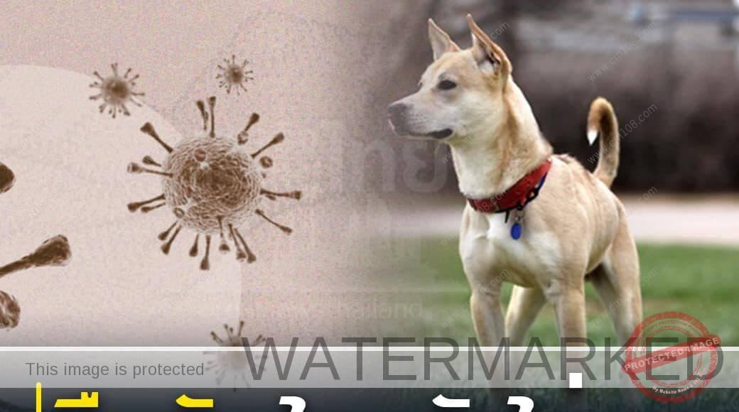 โควิด-19 ในสุนัข