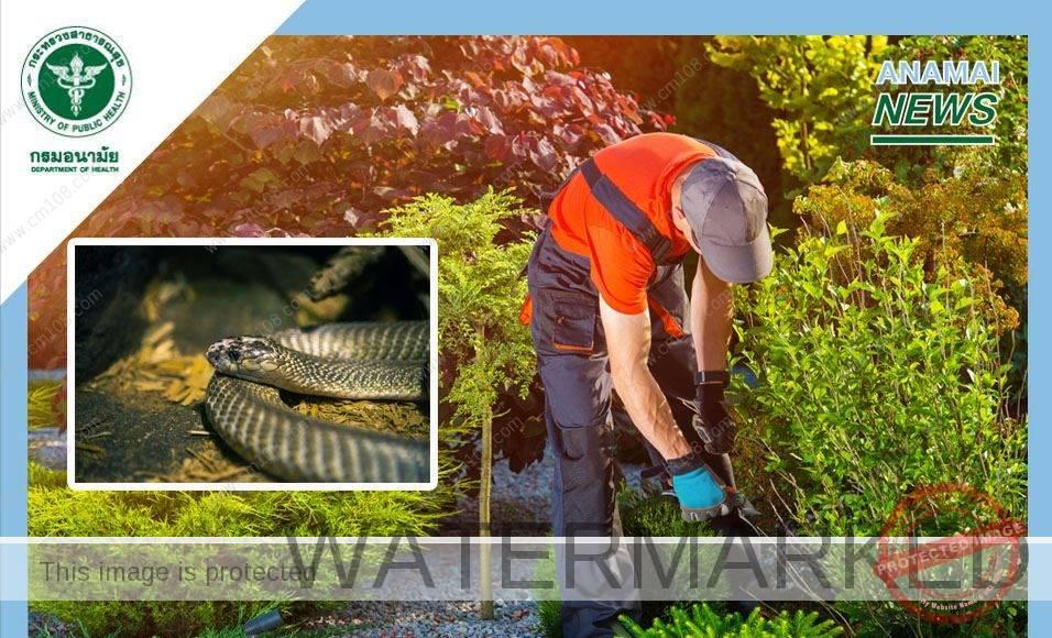 กรมอนามัย แนะนำ จัดสภาพแวดล้อมรอบบ้านป้องกันแมลง-สัตว์มีพิษ ช่วงหน้าฝน