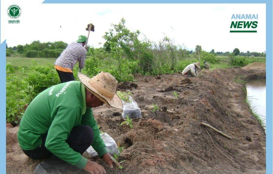 กรมอนามัย ห่วง เกษตรกรสัมผัสดิน โคลนพุ น้ำปนเปื้อนเชื้อโรค เสี่ยงเป็นโรคไข้ดิน